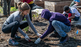 Park Pulse: November 2019: Volunteer Opportunities in Parks
