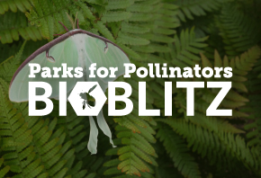 Parks for Pollinators BioBlitz