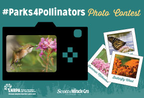Parks4Pollinators Photo Contest