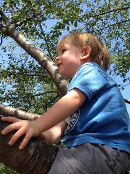 Blog-Free-Play-in-Parks-Climb-Trees