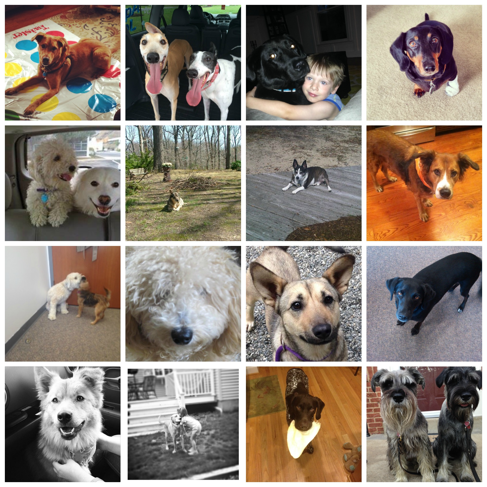 Top-Workplace-NRPA-Dogs