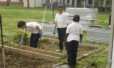 Community gardens provide essential food education to youngsters and offer a beneficial outlet for practical creativity.
