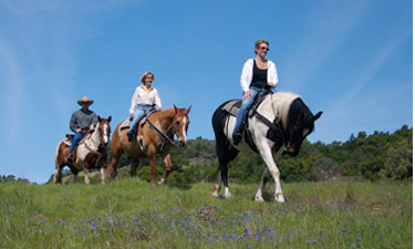 A recent study helps explore the motivations and conflicts in recreational horseback riding.