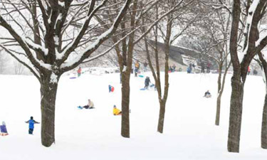 A Nebraska court considers the level of responsibility an Omaha park holds in the injury of a young sledder after failing to remove trees deemed to be a potential danger.