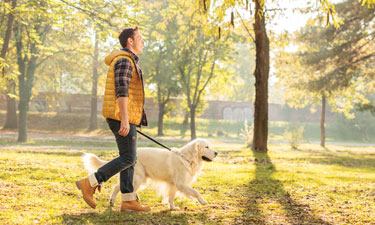 Whether or not they're battling weight problems, dogs and their owners can enjoy much healthier lifestyles just by taking daily walks together.